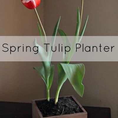 Spring Tulip Planter