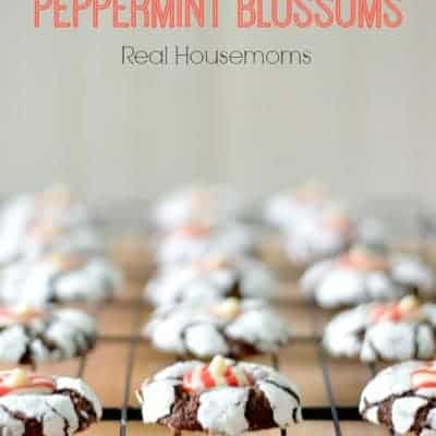 Chocolate Crinkle Peppermint Blossom