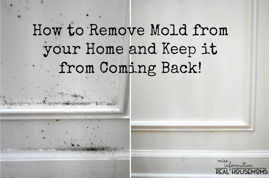 Remove Mold From Your Home And Keep It From Coming Back Real Housemoms