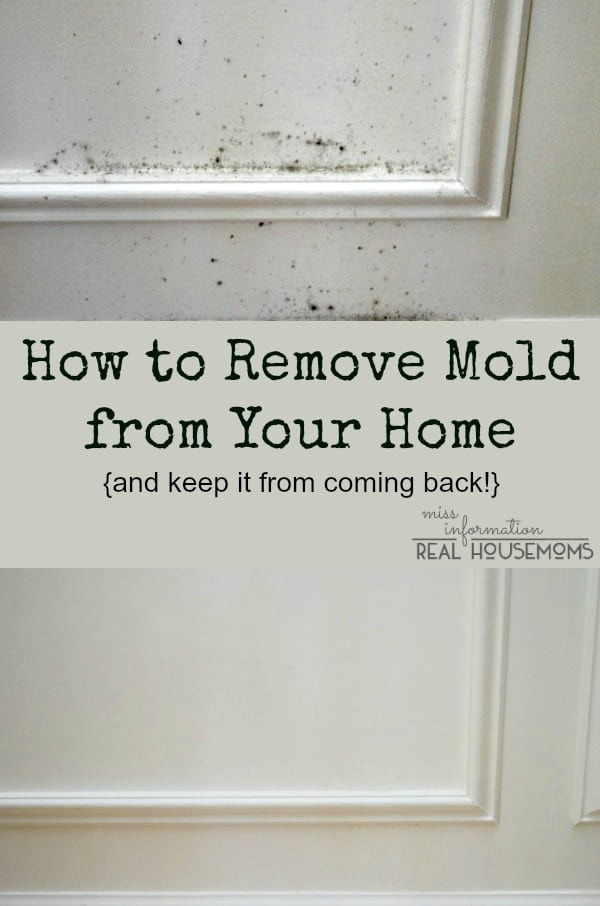 Remove Mold From Your Home And Keep It Coming Back Real Housemoms
