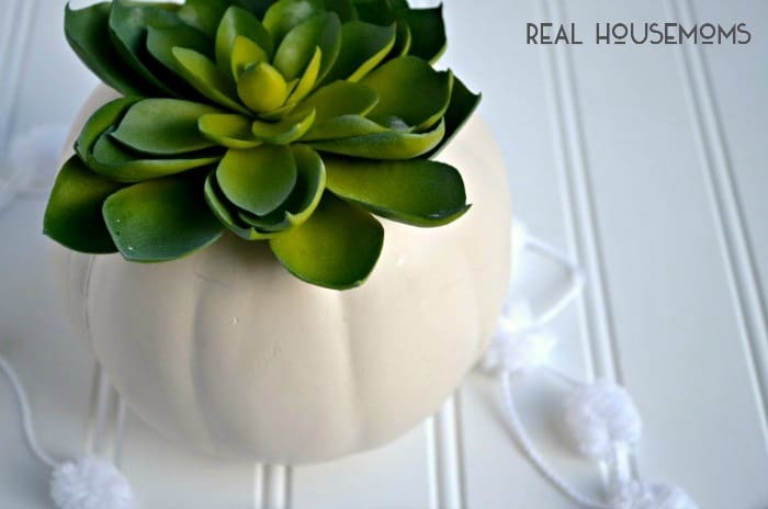 Cluster a bunch of these White Pumpkin Succulent Centerpieces on your Thanksgiving table for a classic, easy decoration!