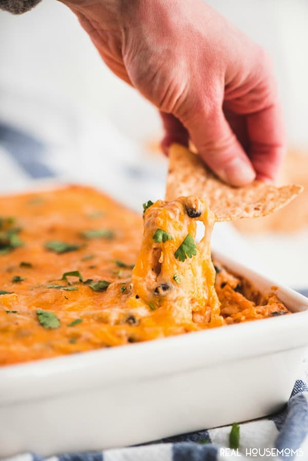 Tortilla chips lifting a bite of cheesy Chicken Enchilada  Dip out of the baking dish